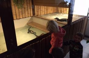 Krokodýli 19.11.